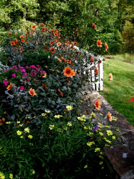 Kring Garden fall 2014 10-5-2014 3-55-46 PM