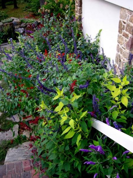 Kring Garden fall 2014 10-5-2014 3-57-24 PM