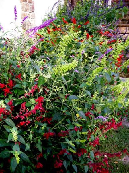 Kring Garden fall 2014 10-5-2014 3-58-01 PM