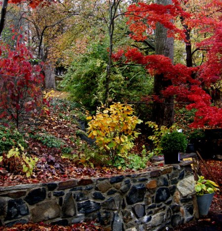 Carolyn's Shade Gardens in fall