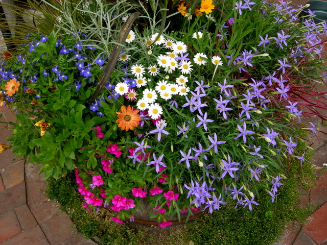 Container Planting Ideas From Camden Maine Carolyn S Shade Gardens