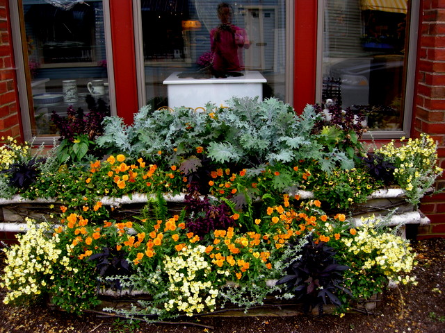 Container Planting Ideas from Camden Maine Camden Containers 7 14 2015 5 35 55 PM