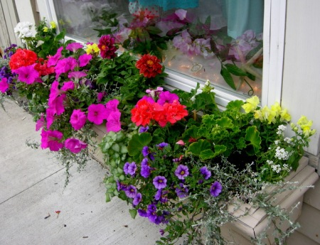window boxes in Camden Maine 7-14-2015 5-33-46 PM