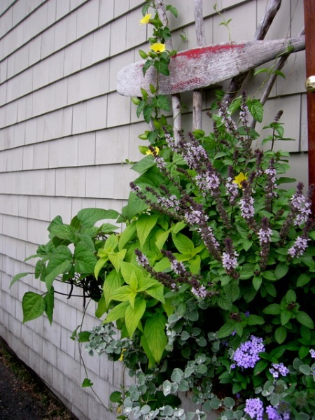 window boxes in Camden Maine 7-14-2015 5-45-52 PM