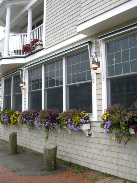 window boxes in Camden Maine 7-14-2015 5-47-09 PM