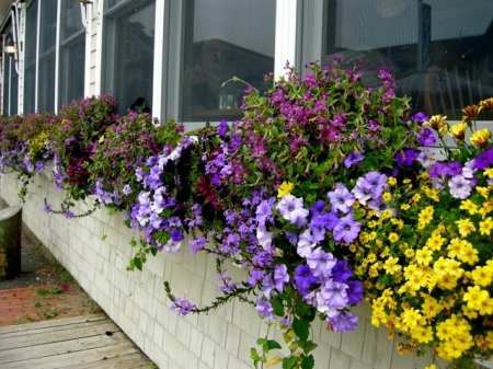 window boxes in Camden Maine 7-14-2015 5-47-39 PM