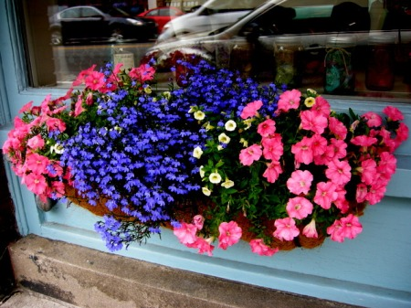 window boxes in Camden Maine 7-14-2015 5-53-45 PM