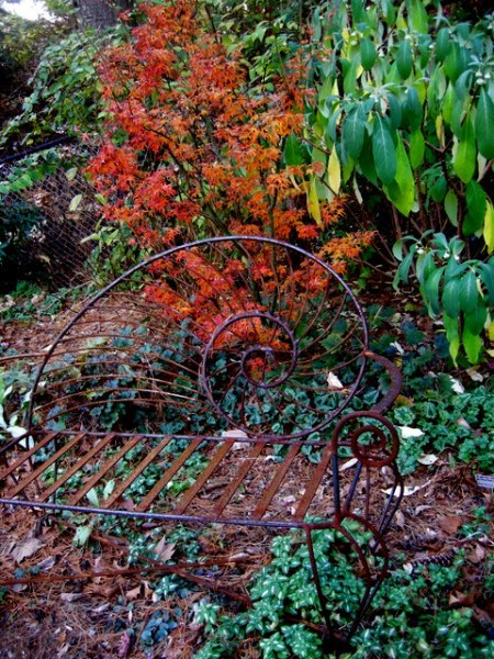 Fall Foliage 2015 Carolyn's Shade Gardens1
