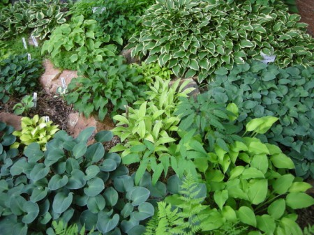 Mini Hosta Rock Garden
