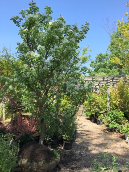 Ambleside Gardens 6-2-2016 10-22-56 AM
