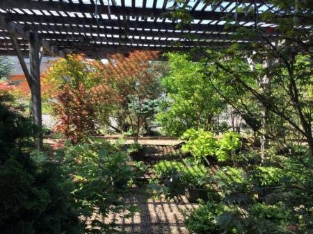 Ambleside Gardens 6-2-2016 10-26-14 AM