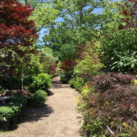 Ambleside Gardens 6-2-2016 11-34-52 AM