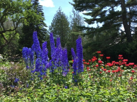Acadia Delphinium and Monarda