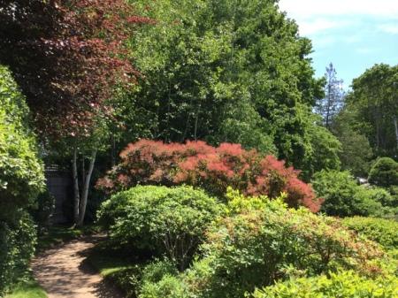 Ascitou Gardens 2016 7-20-2016 1-16-33 PM