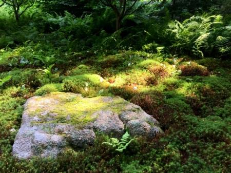 abby-aldrich-rockefeller-garden-7-21-2016-9-30-38-am