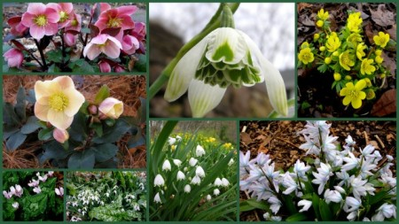 2017-snowdrop-catalogue-images5