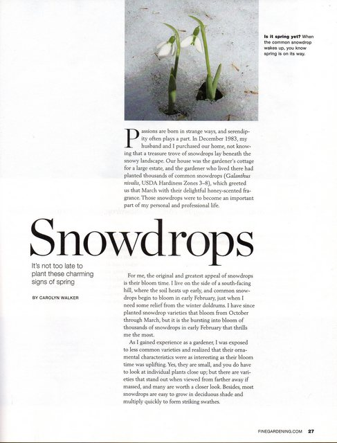 Fine Gardening Feature Article On Snowdrops » Fine Gardening Article  10 16 2017 3 03 26 PM U2013 Copy
