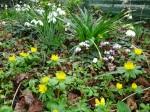Avon Bulbs woodland