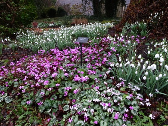 Exceptional Snowdrops And Gardens England February 2018