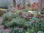 John Massey's garden 2-6-2018 9-18-49AM