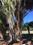 ringling museum & gardens 3-20-2017 10-42-19am