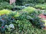 Sycamore Garden